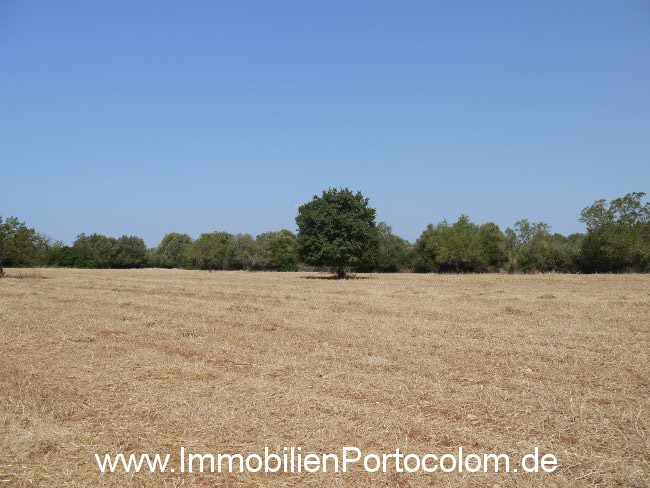 Plot of land Son Negre 1 20713