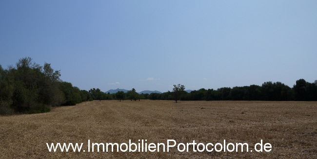 Plot of land Son Negre panorama 20713
